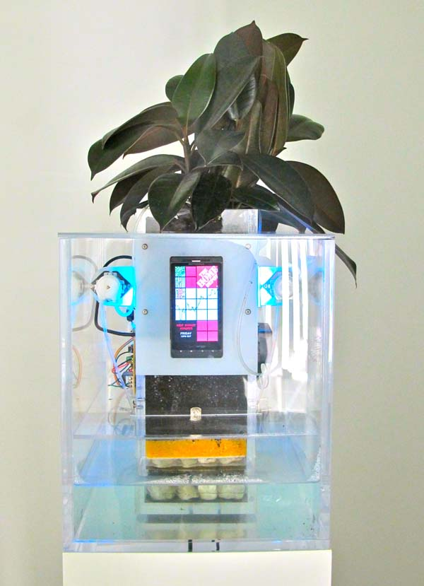 Spore 2.0 by Matt Kenyon, a rubber tree plant from Home Depot that is electronically watered according to the performance of Home Depot's stock.
